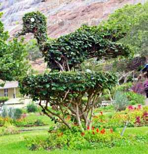 U0027living Sculptureu0027 Saint Helena Island Info Castle Gardens