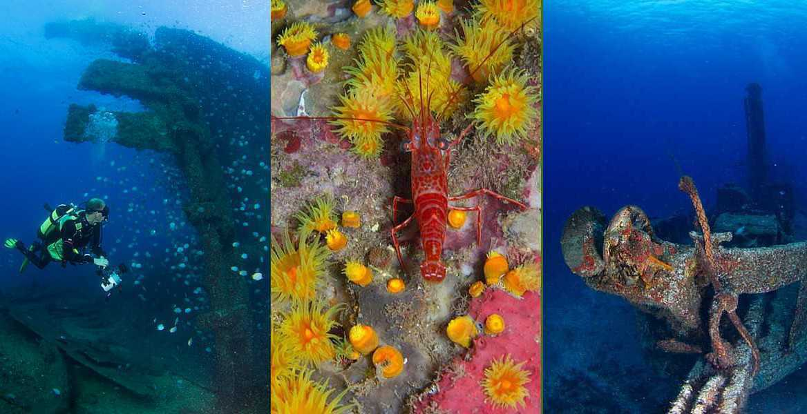 Diver on the SS Papanui; St Helena shrimp, Wharf Steps and the wreck of the MV Bedgellett