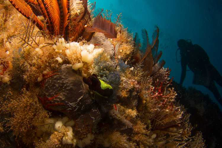 Speery Island [Saint Helena Island Info:Diving]