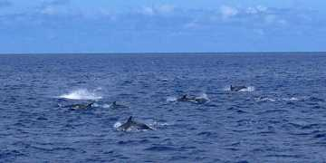 Dolphin-watching trips run from Jamestown