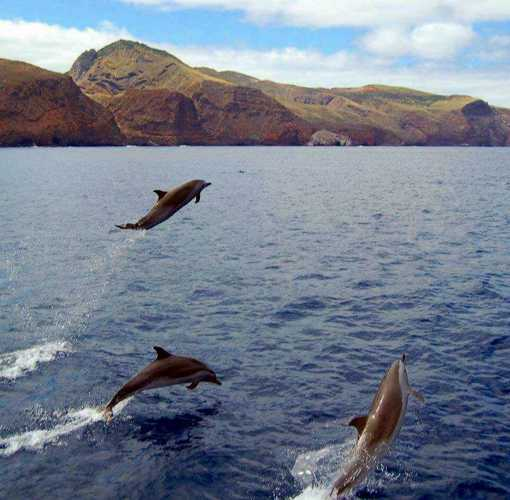 Dolphins following