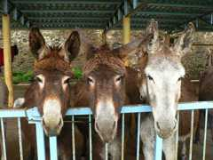 Donkeys in their shelter