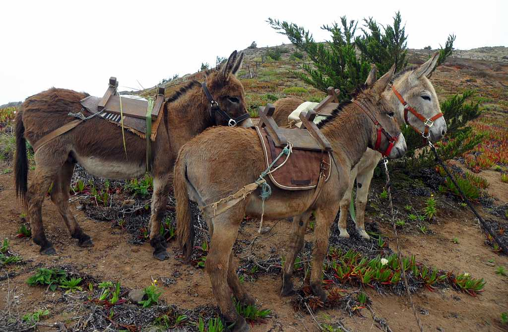 Donkeys waiting by the roadside