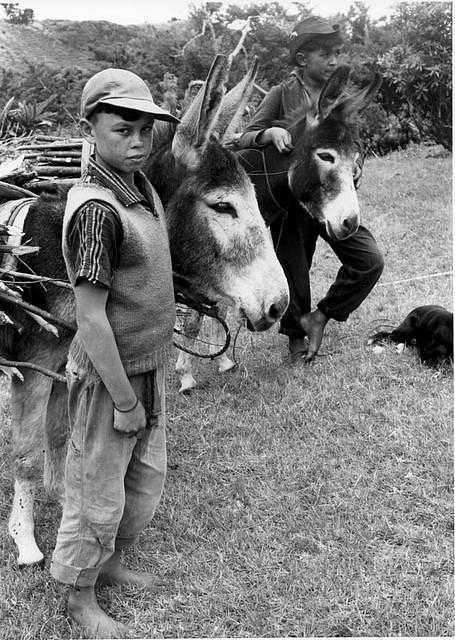 Two donkey keepers, photographed in 1968 [Saint Helena Island Info:Donkeys]