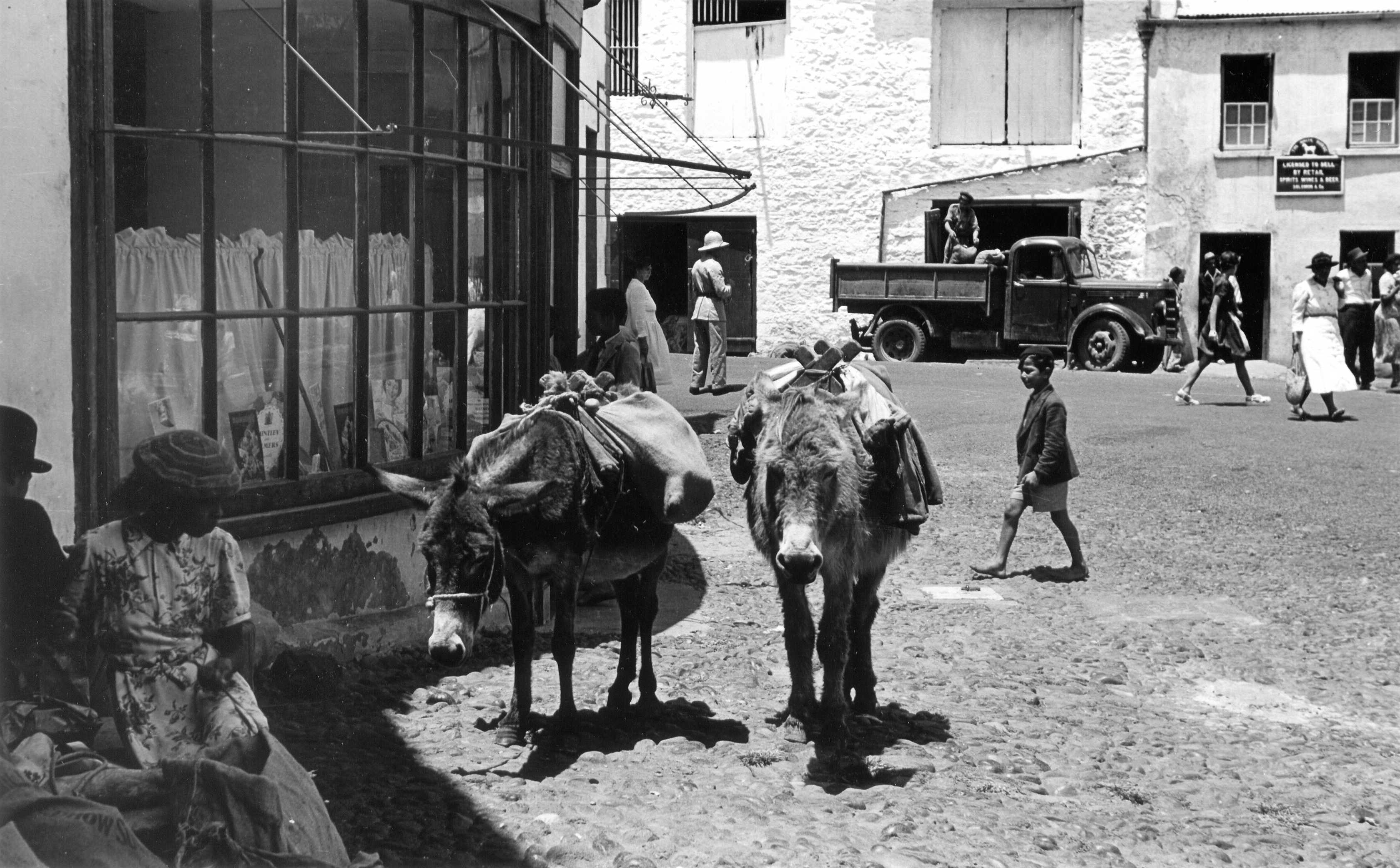 Donkeys at work in Jamestown, in the 1950s