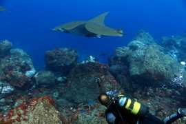With a Devil Ray