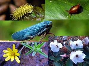 Endemic Species Saint Helena Island Info