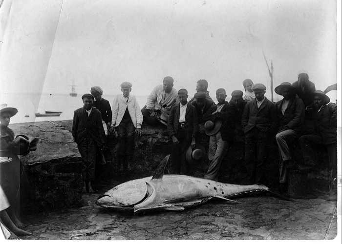 Large fish on the Wharf, c.1900