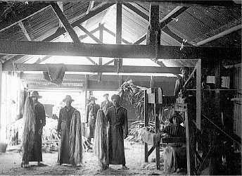 Flax Mill Sandy Bay 1910 Saint Helena Island Info Historic Images