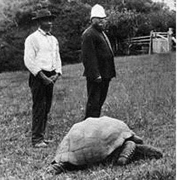 "Jonathan the tortoise ""in a 1900 photograph"" [Saint Helena Island Info:Jonathan the tortoise]"