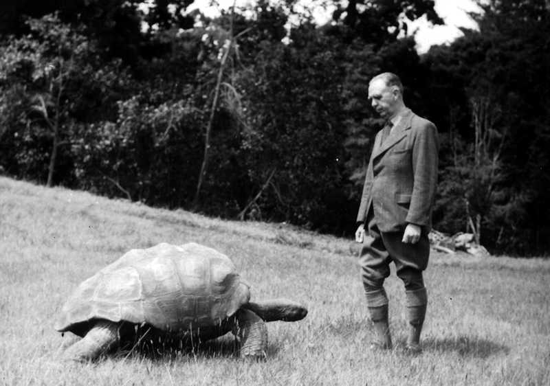 Jonathan in 1942 with Governor W Bain-Gray [Saint Helena Island Info:Jonathan the tortoise]