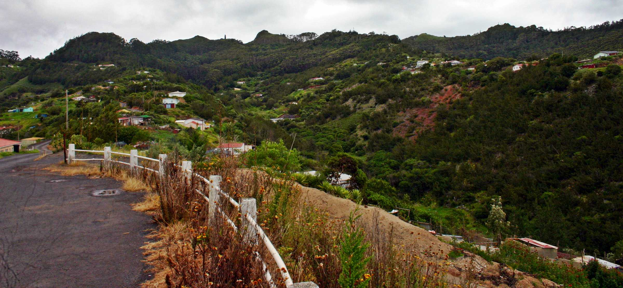 Levelwood from The Flag Saint Helena Island Info