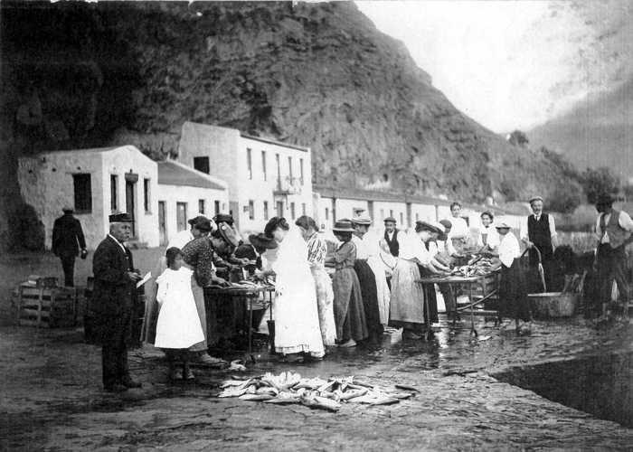 Mackerel processing on the Wharf, 1910 {1}