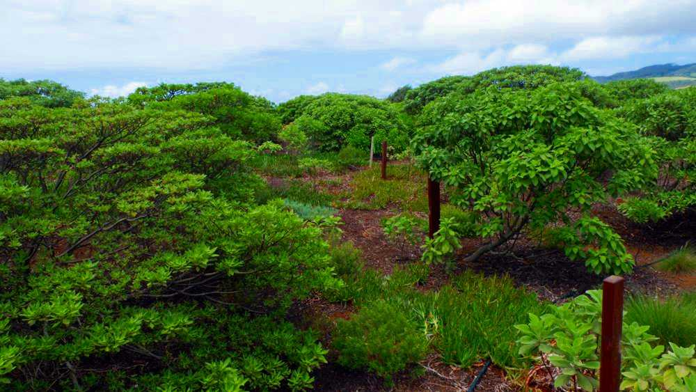 Saint Helena Island Info All About St Helena In The