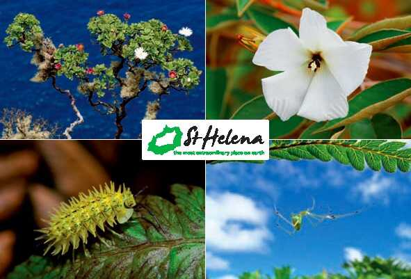 Endemic Species 2011 Saint Helena Island Info Postcards of St Helena