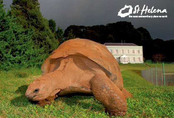 Jonathan the tortoise and Plantation House 2011 Saint Helena Island Info Postcards of St Helena